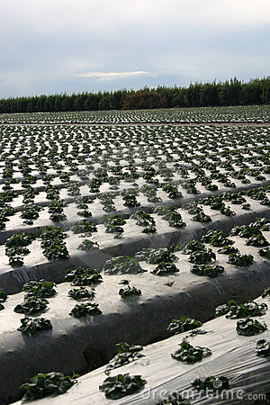 Het beschermen van het Land van het Landbouwbedrijf
