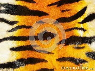 Het bont van de tijger