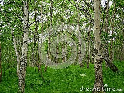 Het bos van de zomer