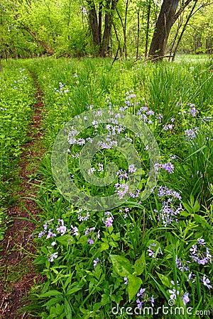Het BosGebladerte Illinois van de lente