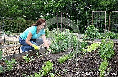 Het communautaire Tuinieren
