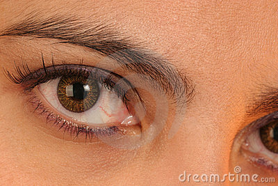 Het contact van het oog