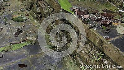 Het druppeltje van water stroomt onderaan de steenbakstenen muur stock videobeelden