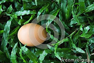 Het ei op gras