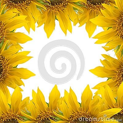 Het frame van de zonnebloem