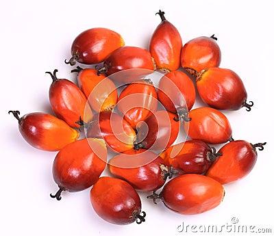 Het fruit van de oliepalm