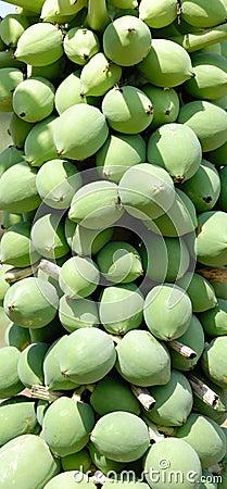 Het fruit van de papaja