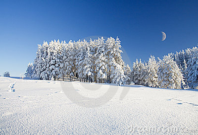 Het gebied en het bos van de sneeuw onder blauwe hemel met halve maan