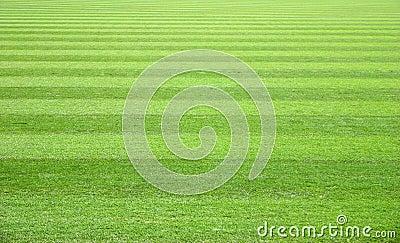 Het Gebied van het gras