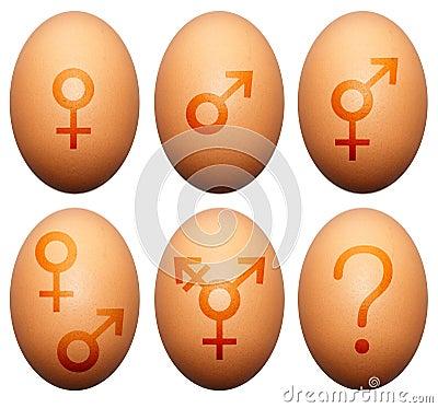 Het geslacht van het ei