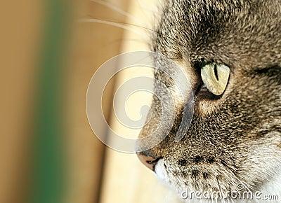 Het gezicht van de kat