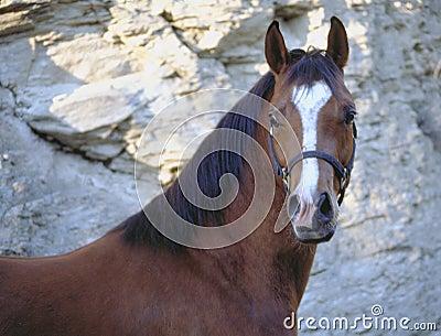 Het gezicht van het paard