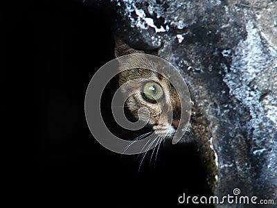 Het gluren van de kat
