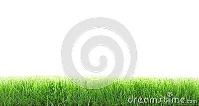 Het gras van de besnoeiing