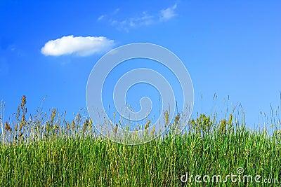 Het gras van de weide en een blauwe hemel