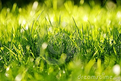 Het groene Bosje van het Gras