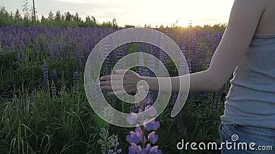 Het handmeisje raakt purpere bloemen op een mooi gebied bij zonsondergang Langzame Motie stock videobeelden