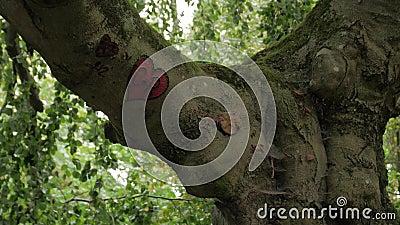 Het hart van de boomschors stock videobeelden