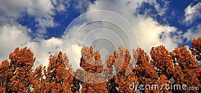 Het hout van de herfst