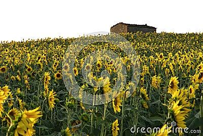 Het huis van het de bloemgebied van de zon