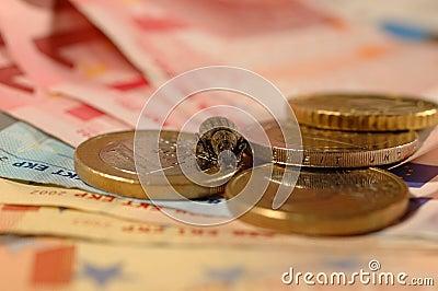 Het insect van het geld