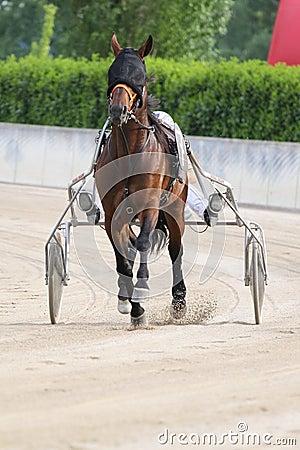 Het Italiaanse rennen van het paard Redactionele Fotografie