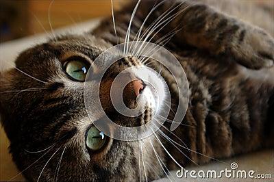 Het kijken van de kat