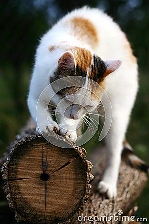 Het krassen van de kat