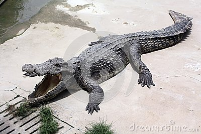 Het Landbouwbedrijf van de krokodil