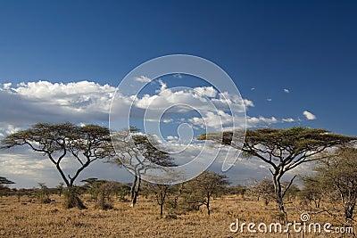 Het landschap van Afrika