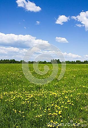 Het landschap van de lente
