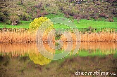 Het landschap van de lente op de rivier