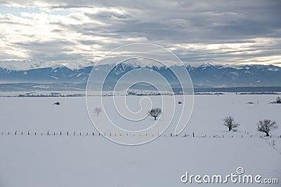 Het Landschap van de winter