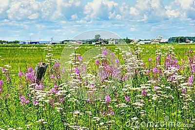 Het landschap van de zomer in landelijk Canada