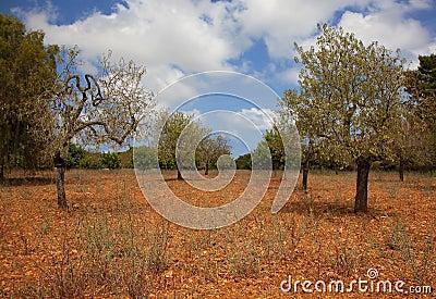 Het landschap van de zomer van Mallorca