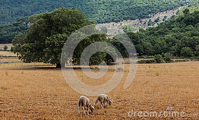 Het Landschap van Mallorca