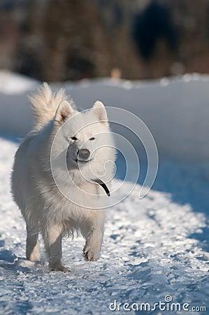 Het lopen in een sneeuw