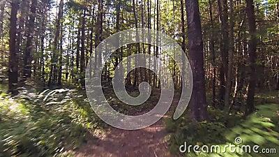Het lopen langs de weg van het Bos Pov Steadicam Shot stock footage