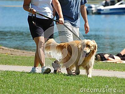 Het lopen van de hond in het park