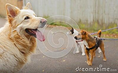 Het lopen van de hond honden