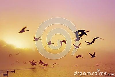 Het Meer D van de zonsopgang