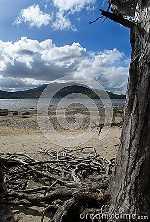 Het nationale park van Killarney