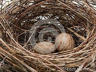 Het nest van de koolmees - detail