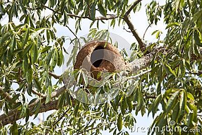 Het nest van de vogel