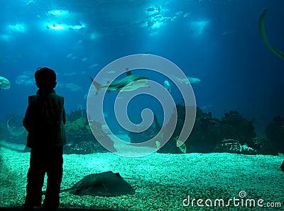 Het onderwater leven