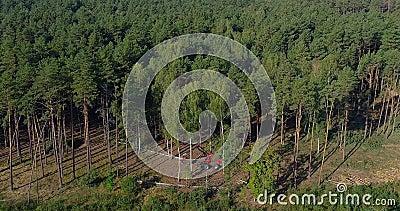 Het onwettige bos zweten, het stropen, kwaad aan het milieu, milieuverstoring stock footage