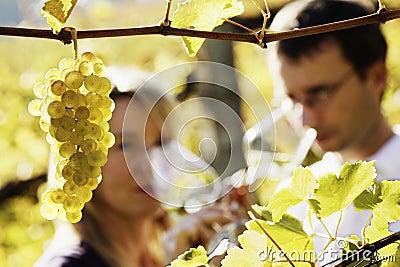 Het paar proevende wijn van Winemaker