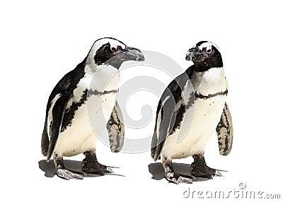 Het paar van de pinguïn