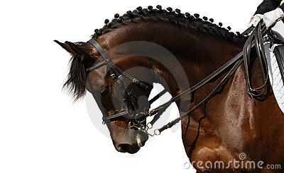 Het paard van de baai