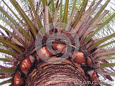 Het Paradijs van de palm
